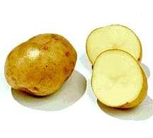 Potato, Kerr's Pink