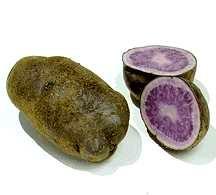 Potatoes_solanum_tuberosum_all_blue-1.full