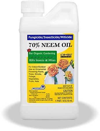 Neem-oil-lg.detail