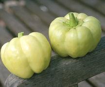 Peppers_capsicum_annuum_blushing_beauty-1.full