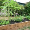 Veggie_boxes.thumb