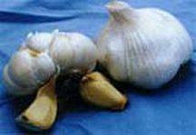Garlic, Inchelium Red
