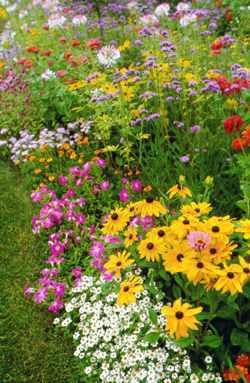 Flowerfromseed3.detail