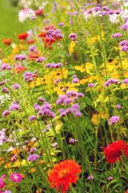 Flowerfromseed7.detail