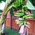 Bananas_92909.small