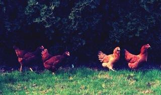 Flock.large