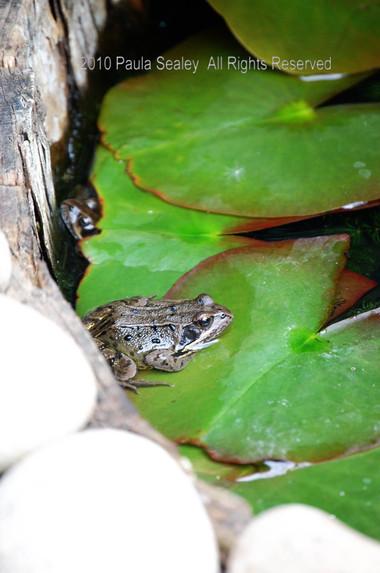 Frog.detail