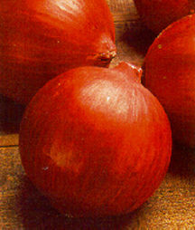 Onion, Long Day 'Red Burgermaster'