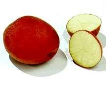 Potato, Buffalo 'Red Ruby'