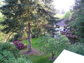 Backyard_may_2_2004_005.large
