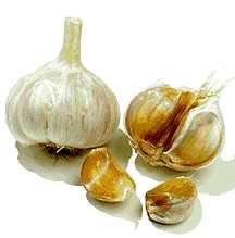 Garlic, German Red