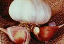 Garlic_and_shallots_allium_sativum_rosewood-1.full