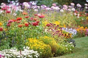 Plants_in_garden.detail
