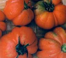 Tomato, Costoluto Genovese (Italian Heirloom, Pre-1900)