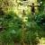 Garden_woman_2.small