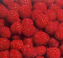 Raspberry, Heritage #5 Red