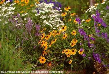 Perennials.detail
