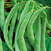 Bean_bountiful_stringless_bush.full