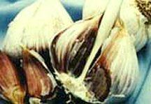 Garlic, Korean Red