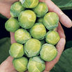 Brussels_sprouts_nautic_f1.thumb