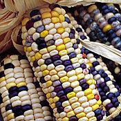 Corn_anasazi_flour.full