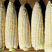 Corn_sugar_pearl.full
