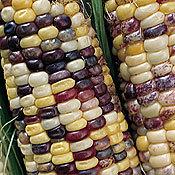Corn_triple_play.full