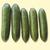 Cucumber: Cucumis sativus, 'Dvir'