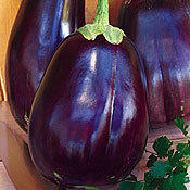 Eggplant_imperial_black_beauty.full