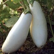 Eggplant_snowy.full