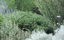 All_plants_artemisia_abrotanum_tangerine-1.full