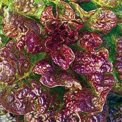 Lettuce_four_seasons.full