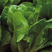 Lettuce_little_ceasar.full