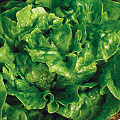 Lettuce_tom_thumb.full