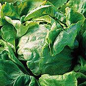 Lettuce_sandrina.full