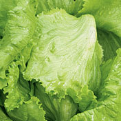 Lettuce_new_york_head.full