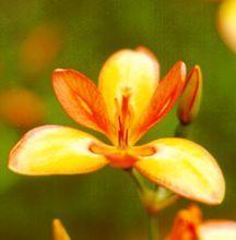 All_plants_pardancanda_sunset_tones-1.full