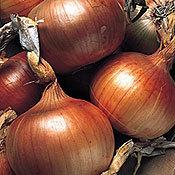 Onion_newburg.full