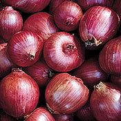 Onion_rossa_di_milano.full