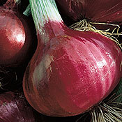 Onion_stockton_red.full