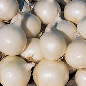 Onion_gladstone.full