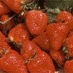 Strawberry, 'Eversweet™' #25