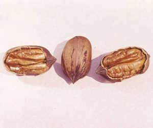 Pecan, 'Colby'