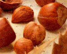 Filbert/Hazelnut, Casina
