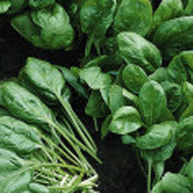 Spinach_tarpy.full