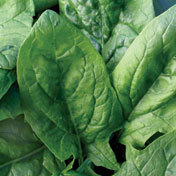 Spinach_viroflay.full