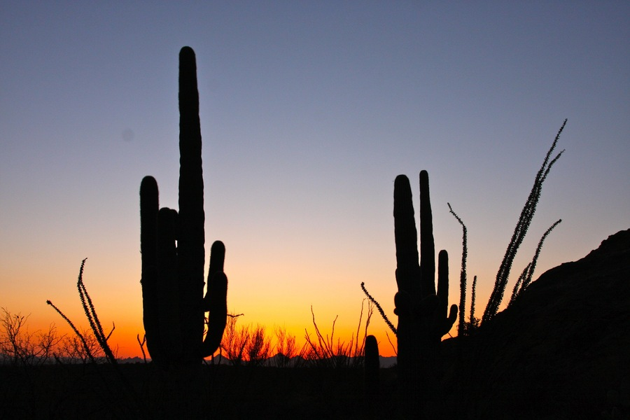 Saguaro_4_sunset.full