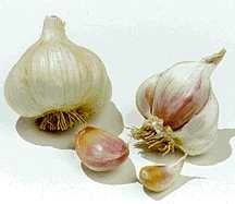 Garlic_and_shallots_allium_sativum_silver_rose-1.medium.detail