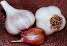 Garlic_and_shallots_allium_sativum_romanian_red-1.full