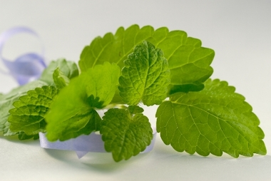 Lemon_balm_reduce.detail